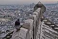 Pigeon in Paris 2.jpg