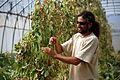 PikiWiki Israel 39949 Agriculture in Israel.JPG