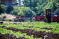 PikiWiki Israel 39952 Agriculture in Israel.JPG