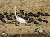 PikiWiki Israel 53080 wildlife animals.jpg