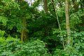 Pimpernussbaum 2251.jpg