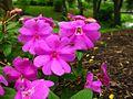 Pink-Flowers-Garden ForestWander.jpg