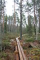Pitkospuut Sammalsuolla, Liesjärven kansallispuisto, Tammela, 15.11.2014.JPG