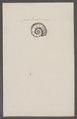 Planites spec. - - Print - Iconographia Zoologica - Special Collections University of Amsterdam - UBAINV0274 091 01 0060.tif