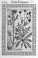 "Plant from ""Minus cognitarum..."" Wellcome L0007941.jpg"
