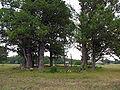 Plenakiu kapinaites 2006-08-05.jpg