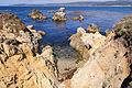 Point Lobos September 2012 003.jpg