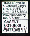 Polyergus rufescens casent0010688 label 1.jpg