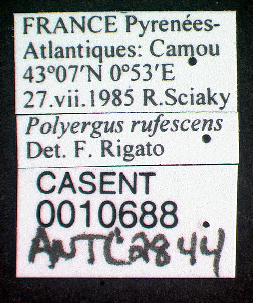 Label view of ant Polyergus rufescens specimen casent0010688.
