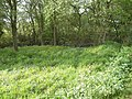 Pond at Jamesland farm, Copsale - geograph.org.uk - 414040.jpg