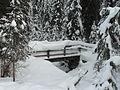 Ponticello di legno in Val Campo di Dentro.JPG