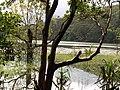 Pookkodu Lake Wayanad Kerala (227593476).jpg