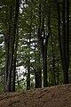 Porter Lake Trail, Forest Park, Springfield, Massachusetts - panoramio (3).jpg