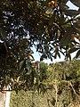 Posse, Teresópolis - RJ, Brazil - panoramio (32).jpg