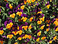 Postojna - flowers.jpg