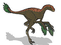 Protarchaeopteryx 4713.JPG