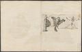 Pteromys volans - 1700-1880 - Print - Iconographia Zoologica - Special Collections University of Amsterdam - UBA01 IZ20400100.tif
