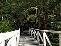 Puentes Patogónicos.JPG