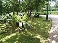 Putrajaya, the Botanical Garden 40.jpg