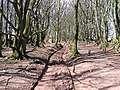 Quantock hill walk near Quantock farm - geograph.org.uk - 147701.jpg