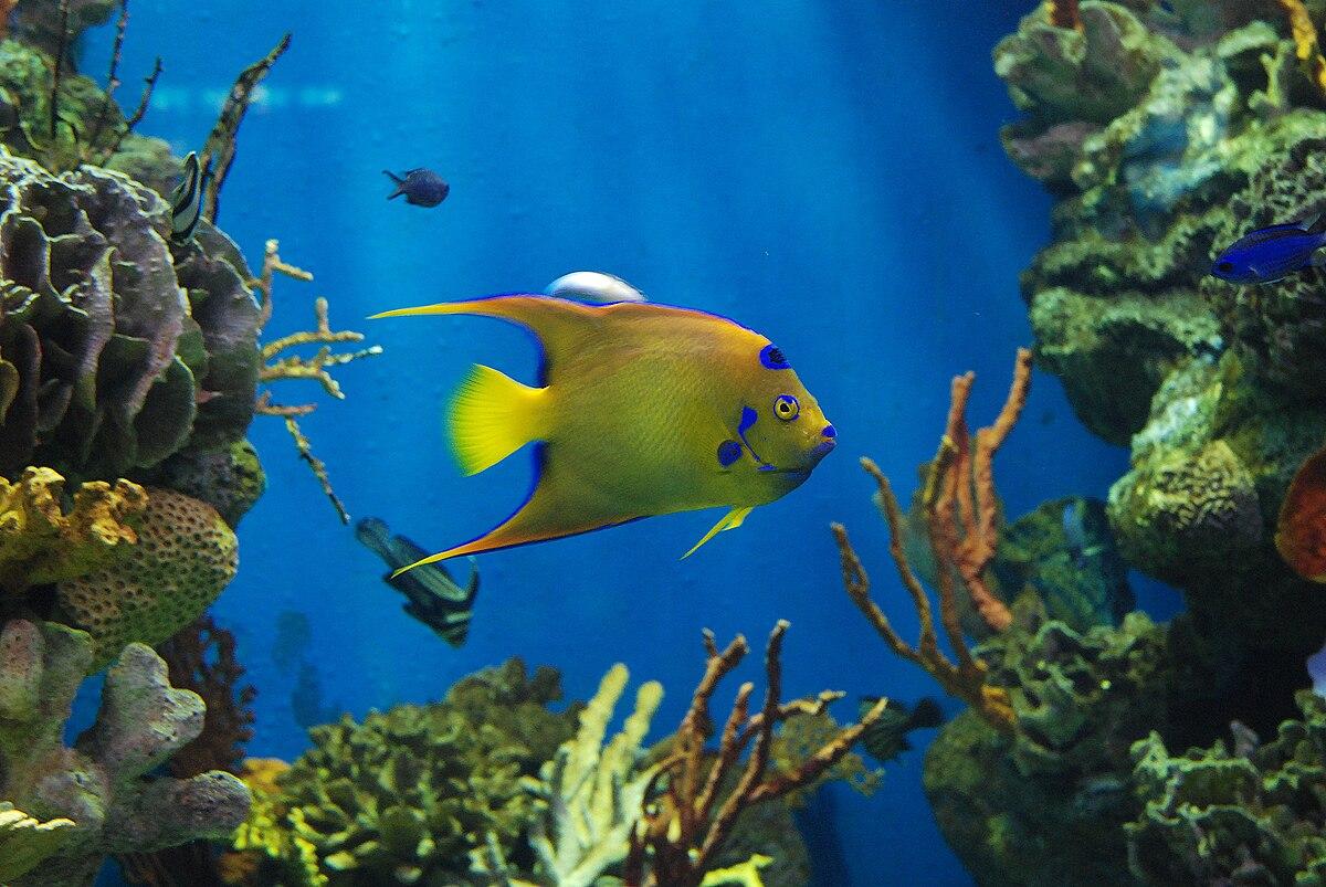 Aquarium van barcelona wikipedia for Aquarium de barcelona