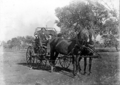 Queensland State Archives 3184 Horse drawn buckboard at Moonjaree c 1910.png
