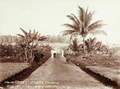 Queensland State Archives 5172 At Daru Island showing cultivation 1898.png