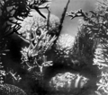 Queensland State Archives 885 A coral garden Great Barrier Reef c 1928.png