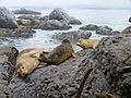 RBCM - Diorama Coastal Cliffs 4.jpg