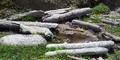 RedwoodDriftwood.png