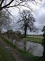 Rhee and Tree - geograph.org.uk - 728256.jpg