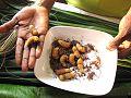 Rhynchophorus ferrugineus - edible larvae of Red Palm weevil.jpg