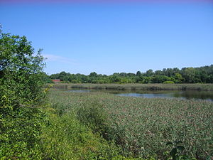 Ridgewood Reservoir - Marsh in center basin. Red building is one of two gatehouses