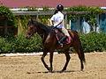 Riding a Horse Backwards 1110784.jpg
