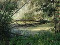 Ried La Wantzenau 4-8-2002.jpg