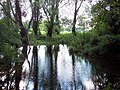 River Allen near Damerham - geograph.org.uk - 448094.jpg