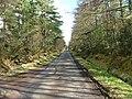 Road Through the Trees - geograph.org.uk - 361898.jpg