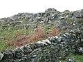 Rocky outcrop, Drumloist farm - geograph.org.uk - 267597.jpg