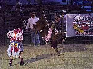 Steer riding - Steer riding