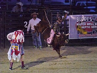 Steer riding rodeo sport involving someone attempting to mount a bucking steer