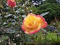 Roses nau jardin du thabor a rennes - panoramio.jpg