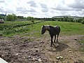 Rough Grazing beside the River Tame - geograph.org.uk - 437991.jpg