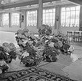 Ruimte met bloemstukken in manden en tapijt (vermoedelijk cadeaus bij receptie), Bestanddeelnr 255-8485.jpg