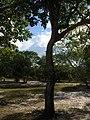 Rungan Sari Yard 01.jpg