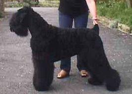 Black Dog Guide Service Nate Salisbury