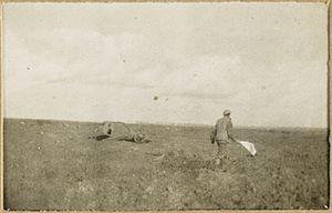 White flag - Australian soldier looking for wounded under protection of a white flag, Western Front (World War I)