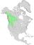 Salix scouleriana range map 0.png