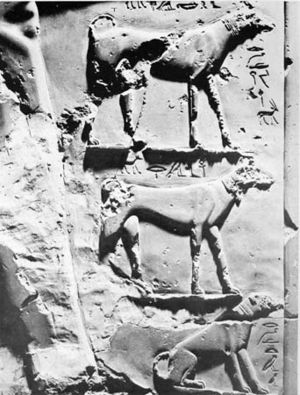 Intef II - The dogs of Intef II on his funerary stele, Egyptian Museum, Cairo.