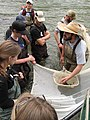 Sampling fish in the French Broad River (5333417240).jpg