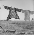 San Lorenzo, California. Washday 48 hours before evacuation of persons of Japanese ancestry from th . . . - NARA - 537542.tif